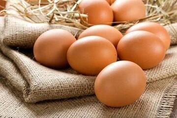 در هفته چند عدد تخممرغ میتوان خورد؟