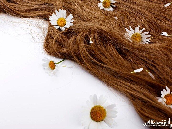 گیاهان دارویی مفید برای رشد مو؛ از دانه کتان تا جینسینگ