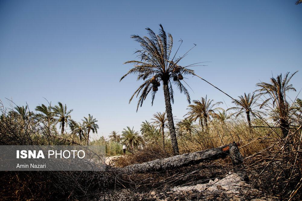 آتشسوزی وحشتناک در نخلستان اروندکنار / تصاویر