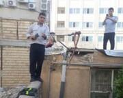 زندهگیری مار سمی ۲ متری از سقف یک خانه در زنجان / عکس