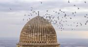 هجوم وحشتناک پرندهها به یکی از شهرهای ترکیه / فیلم