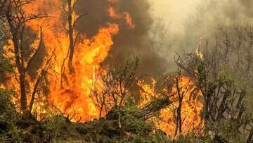 بیش از ۲۰۰ هکتار از جنگلهای زاگرس در آتش سوخت / بخش قابل توجهی از آتش سوزیها عمدی است