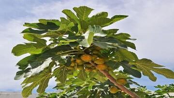 حقایقی جالب و خواندنی درباره بعضی از میوهها که با شنیدن آن شگفتزده میشوید