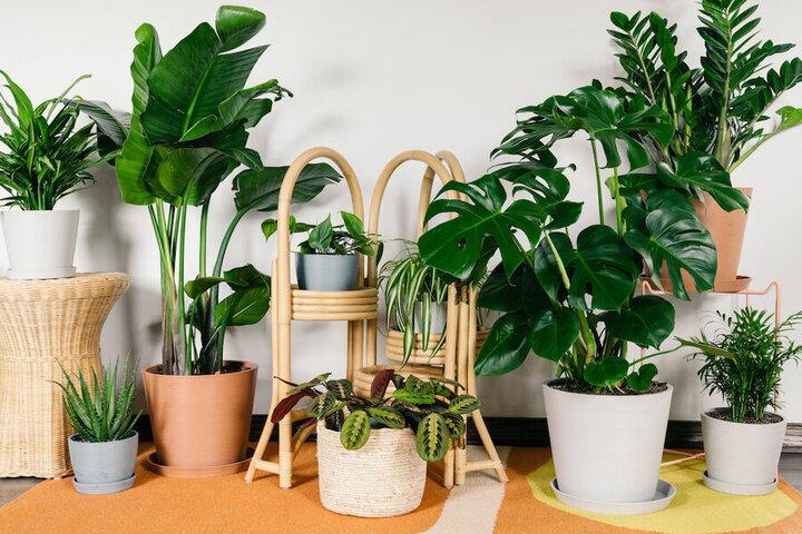 چگونه گیاهان آپارتمانی را شاداب نگه داریم؟