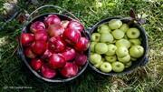جدیدترین قیمت انواع میوه در بازار / هندوانه گران شد