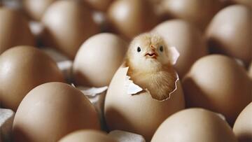 خواص شگفتانگیز مصرف زرده تخم مرغ برای بدن