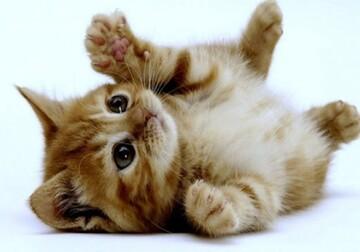 لحظه نجات بچه گربه گرفتار شده از سطل قیر داغ در همدان / فیلم