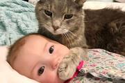 لحظه نجات جان کودک خردسال از مرگ حتمی توسط گربه خانگی / فیلم
