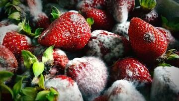 آیا خوردن میوه کپک زده ضرر دارد؟