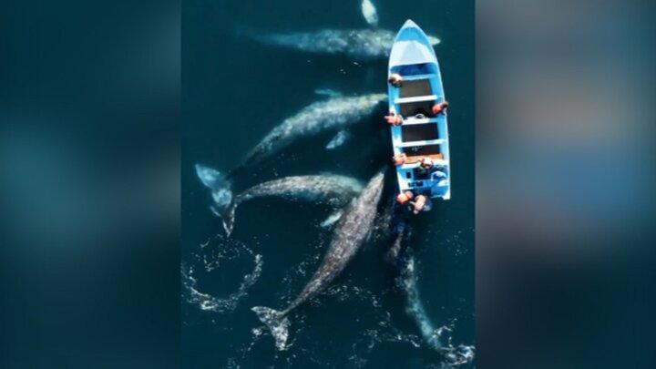 حضور جالب نهنگها کنار یک قایق / فیلم