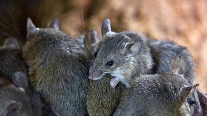 تعطیلی زندانی در استرالیا به دلیل حمله موشها / فیلم