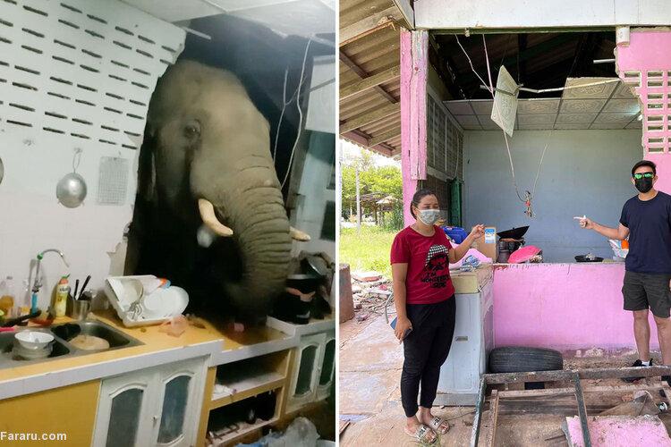 وقتی فیل گرسنه به طرز عجیبی به آشپزخانهای در تایلند سرک میکشد! / فیلم