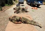 تیم ۵ نفره ضدانقلاب در کردستان منهدم شد