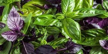 پیشگیری و درمان افسردگی با مصرف این سبزی