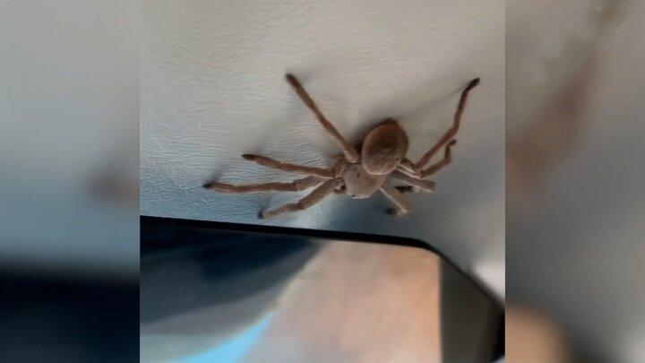 فرود اضطراری عجیب هواپیما به خاطر وجود یک عنکبوت در کابین خلبان / فیلم