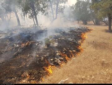 آتش در جنگلهای دنا دوباره شعلهور شد