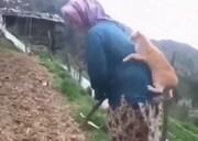 علاقه شدید گربه به یک زن روستایی / فیلم