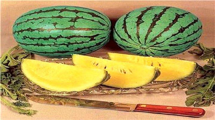 خواص بینظیر هندوانه آناناسی؛ از تضمین سلامت قلب و دستگاه گوارش تا دفع سنگ کلیه
