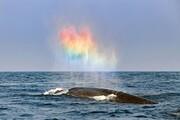 نقش بستن رنگینکمان توسط نهنگ در وسط اقیانوس! / فیلم