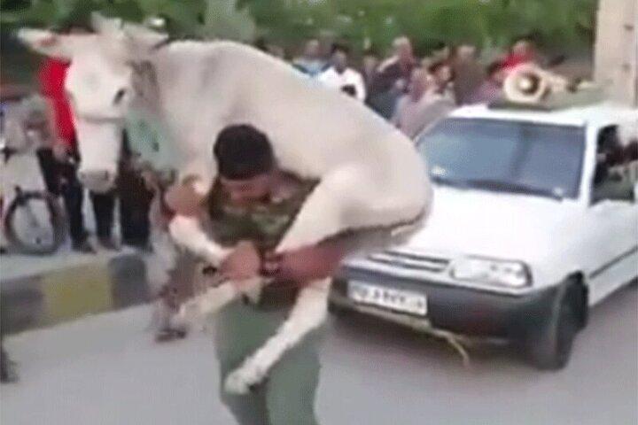 ویدیوی دیدنی از مسابقه قویترین مردان ایران با حمل الاغ !