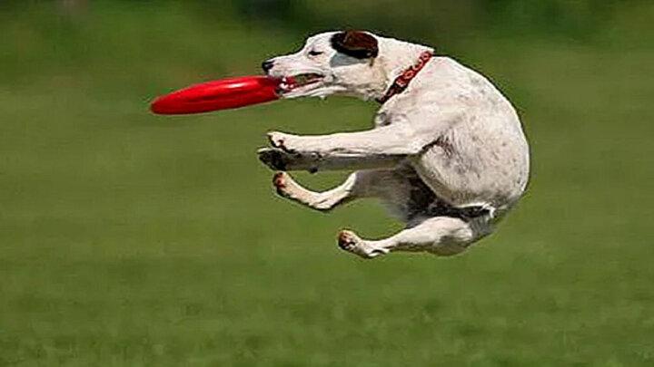 سگ آزاری این مرد خودش را سوژه کرد / فیلم