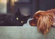 کدام حیوان خانگی از صاحب خود کرونا میگیرد؟