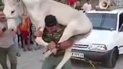 حمل عجیب یک خر و کشیدن همزمان سه خودرو توسط مرد قوی هیکل / فیلم