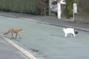 بازی خندهدار گربه و روباه در خیابان / فیلم