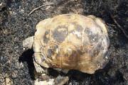 لحظه آب دادن به لاکپشت پس از نجات از چنگال آتش / فیلم