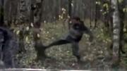 سقوط درخت روی سر مردی که به درختان لگد می زد / فیلم