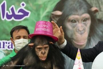 شامپانزه باغ وحش ارم به کنیا رسید