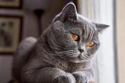 واکنش خندهدار گربه وقتی خودش را در آینه دید / فیلم