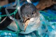 نجات کبوتر گرفتار شده در کیسههای پلاستیکی / فیلم