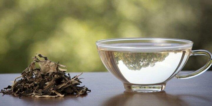 آشنایی با برخی خواص چای سبز / از لاغری تا داشتن پوستی درخشان