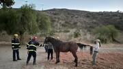 ویدیویی از لحظه نجات اسب گرفتارشده با هلی کوپتر