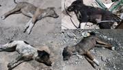 تصاویری تکان دهنده از سگ کشی بی رحمانه در تبریز