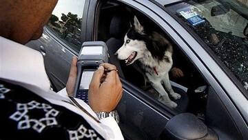 دلیل برخورد مسلحانه پلیس با یک سگگردانی در تهران اعلام شد / فیلم