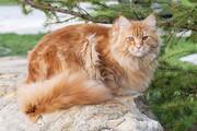 شکموترین گربه جهان / فیلم