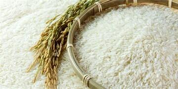 برنج قسطی هم از راه رسید! / عکس
