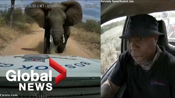 له کردن خودرو توسط فیل عصبانی / فیلم