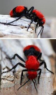 رنگهای حیرتانگیز بعضی از حیوانات در طبیعت / تصاویر