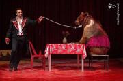 حمله  وحشتناک خرس به مربیاش در سیرک / فیلم