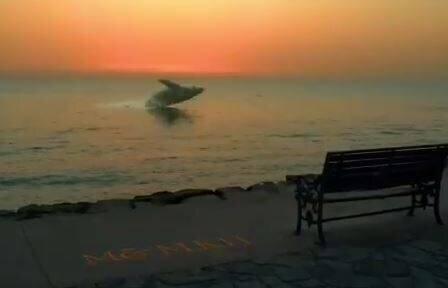 پرش زیبای نهنگ در ساحل بوشهر / فیلم