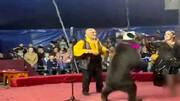 ویدیو وحشتناک از لحظه حمله خرس به مربی زن سیرک / فیلم