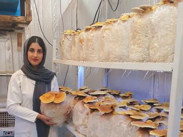 تولید بذر گانودرما در ایران!