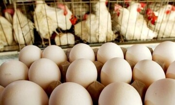 گرانی تخم مرغ در راه است