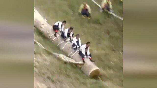 تفریح عجیب در ژاپن با تنه درخت / فیلم