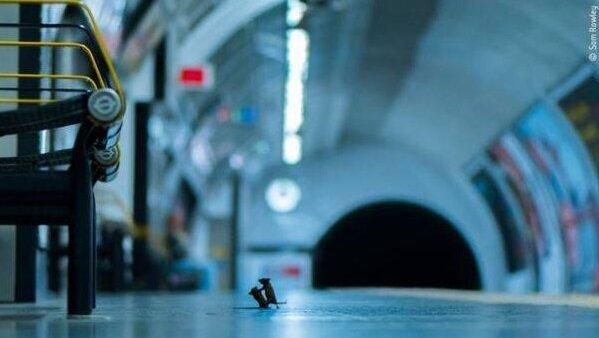 عکس دیدنی از دعوای دو موش در متروی لندن