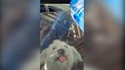 نجات سگ تشنه توسط یک بازیگر در تبریز / فیلم