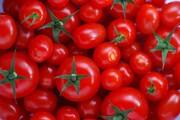 دلیل افزایش قیمت گوجه فرنگی مشخص شد!